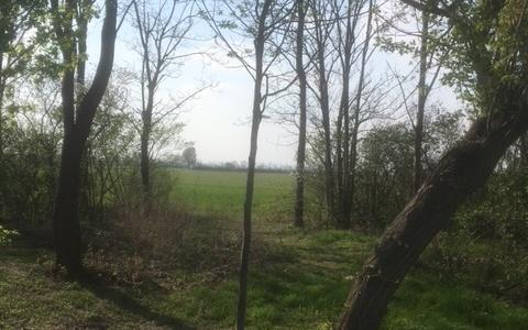 Wir haben 3 neue Bäume in Rutzendorf gepflanzt